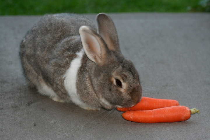 Pupu porkkanat